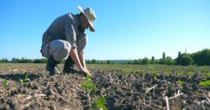 Καλλιέργεια λαχανικών και πεπονοειδών, ριζών και κονδύλων