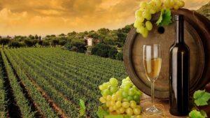 Παραγωγή Οίνου Από Σταφύλια
